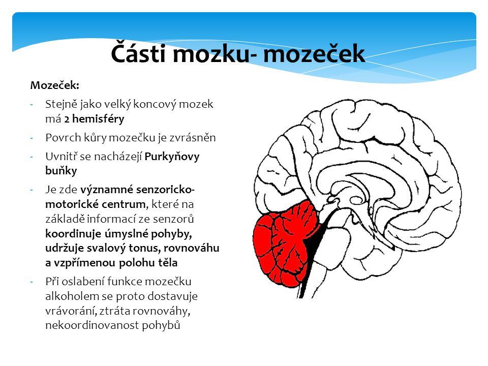 Mozeček: -Stejně jako velký koncový mozek má 2 hemisféry -Povrch kůry mozečku je zvrásněn -Uvnitř se nacházejí Purkyňovy buňky -Je zde významné senzor