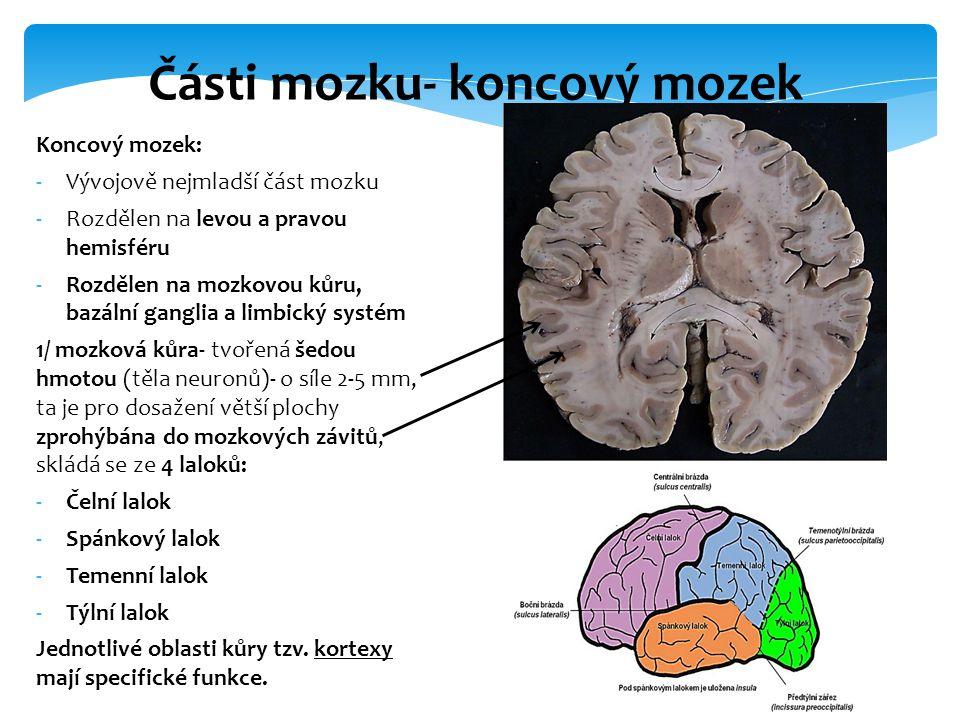 Koncový mozek: -Vývojově nejmladší část mozku -Rozdělen na levou a pravou hemisféru -Rozdělen na mozkovou kůru, bazální ganglia a limbický systém 1/ m