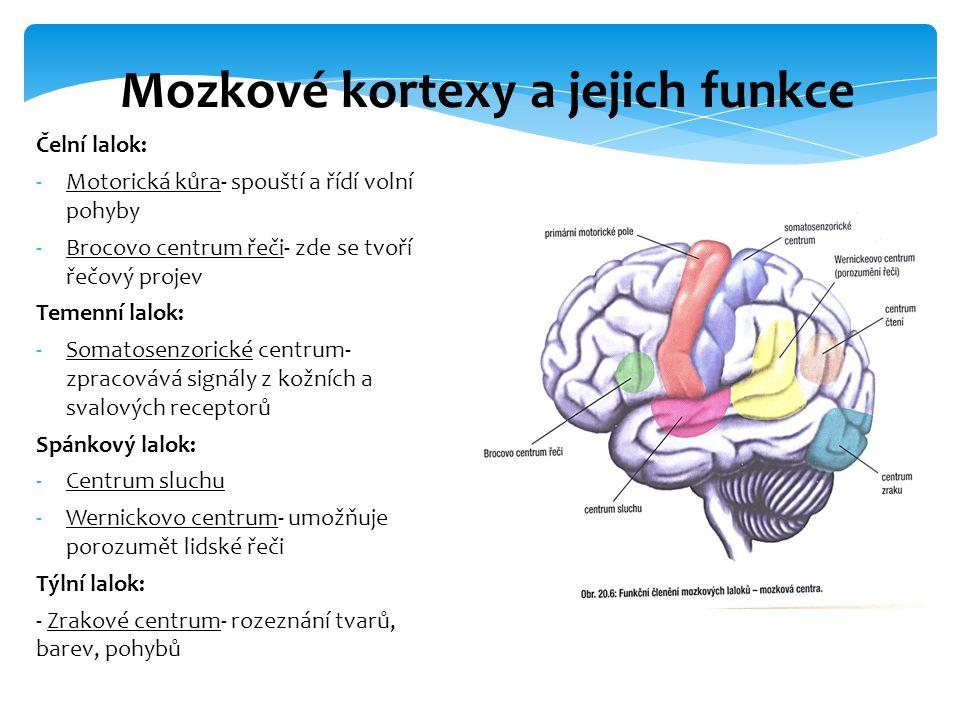 Čelní lalok: -Motorická kůra- spouští a řídí volní pohyby -Brocovo centrum řeči- zde se tvoří řečový projev Temenní lalok: -Somatosenzorické centrum-