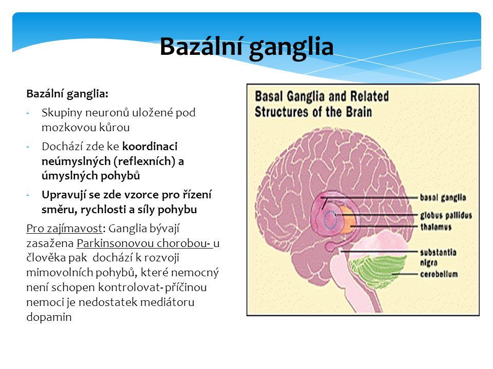 Bazální ganglia: -Skupiny neuronů uložené pod mozkovou kůrou -Dochází zde ke koordinaci neúmyslných (reflexních) a úmyslných pohybů -Upravují se zde v