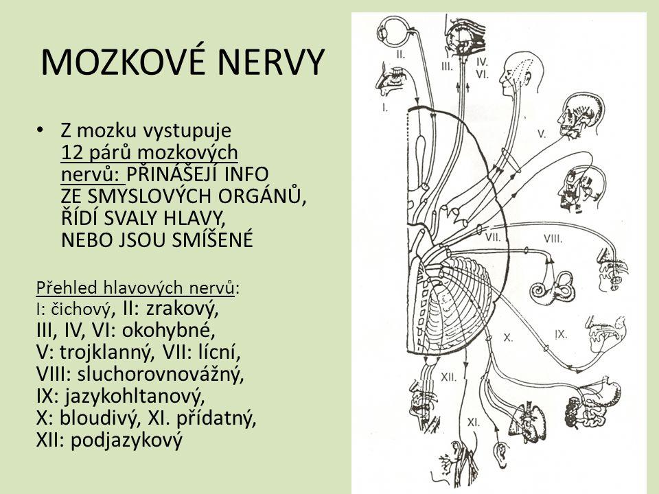 MOZKOVÉ NERVY Z mozku vystupuje 12 párů mozkových nervů: PŘINÁŠEJÍ INFO ZE SMYSLOVÝCH ORGÁNŮ, ŘÍDÍ SVALY HLAVY, NEBO JSOU SMÍŠENÉ Přehled hlavových nervů: I: čichový, II: zrakový, III, IV, VI: okohybné, V: trojklanný, VII: lícní, VIII: sluchorovnovážný, IX: jazykohltanový, X: bloudivý, XI.