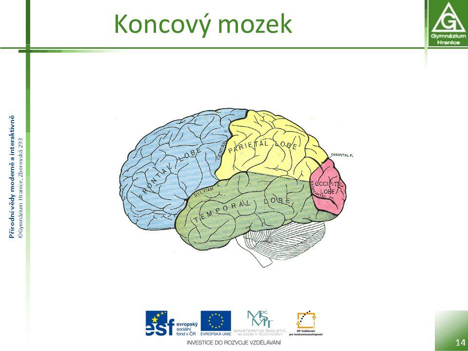 Přírodní vědy moderně a interaktivně ©Gymnázium Hranice, Zborovská 293 Koncový mozek 14