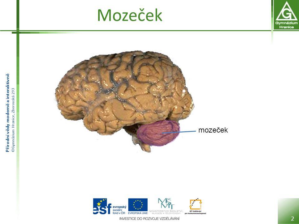 Přírodní vědy moderně a interaktivně ©Gymnázium Hranice, Zborovská 293 Mozeček Vpředu přiléhá k střednímu mozku, Varolově mostu a prodloužené míše.