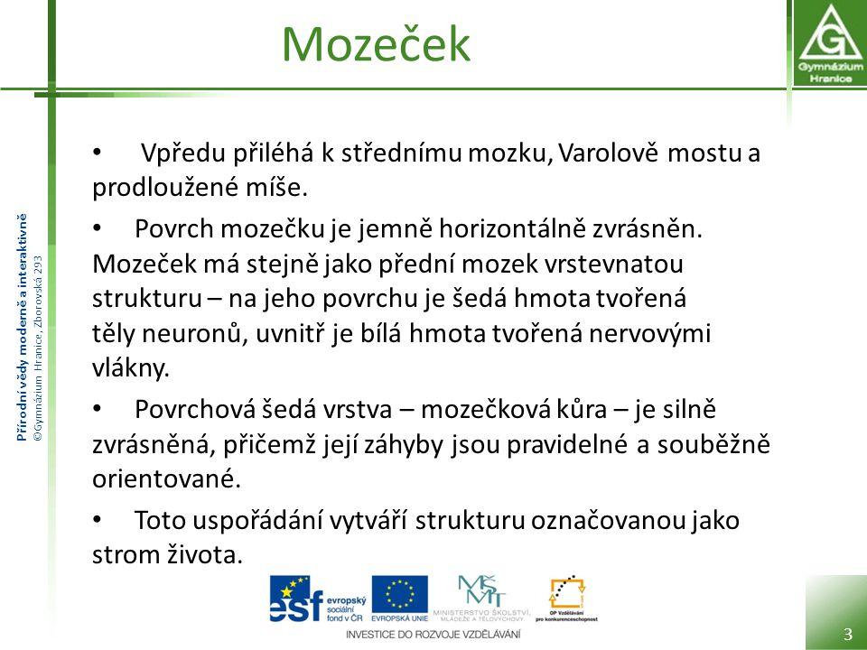 Přírodní vědy moderně a interaktivně ©Gymnázium Hranice, Zborovská 293 Mozeček Vpředu přiléhá k střednímu mozku, Varolově mostu a prodloužené míše. Po