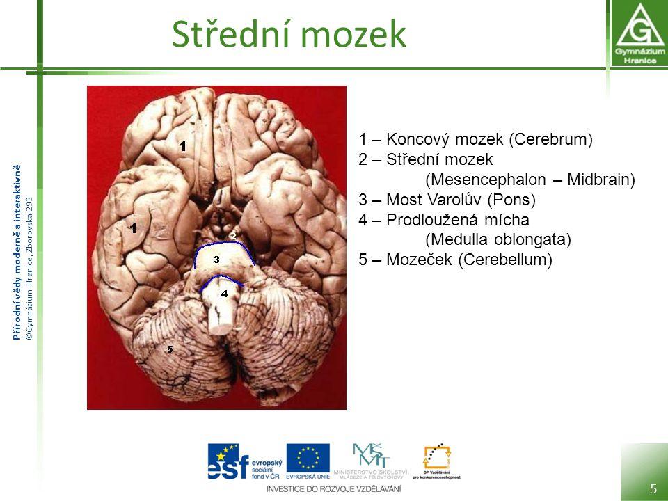 Přírodní vědy moderně a interaktivně ©Gymnázium Hranice, Zborovská 293 Střední mozek 5 1 – Koncový mozek (Cerebrum) 2 – Střední mozek (Mesencephalon –
