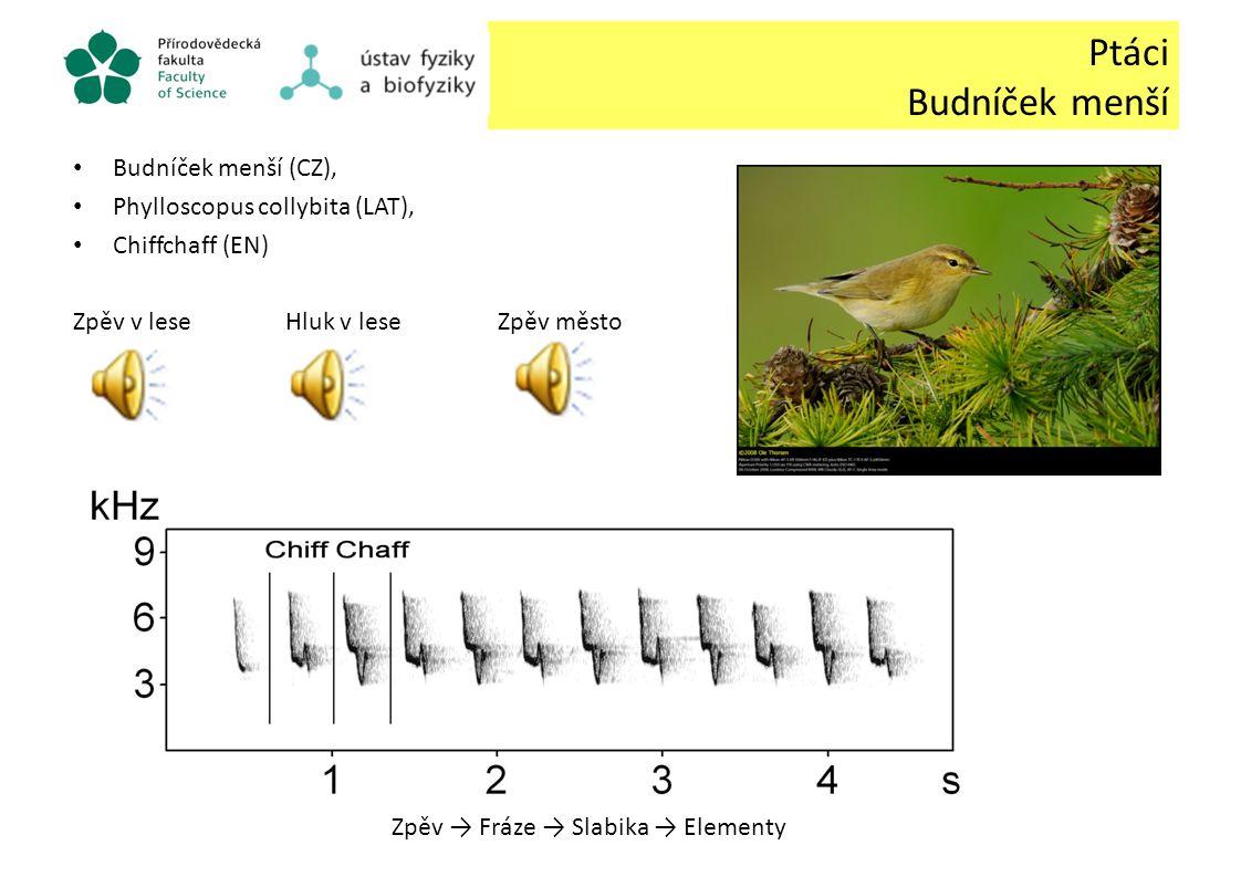 Ptáci Budníček menší Budníček menší (CZ), Phylloscopus collybita (LAT), Chiffchaff (EN) Zpěv v leseHluk v leseZpěv město Zpěv → Fráze → Slabika → Elem