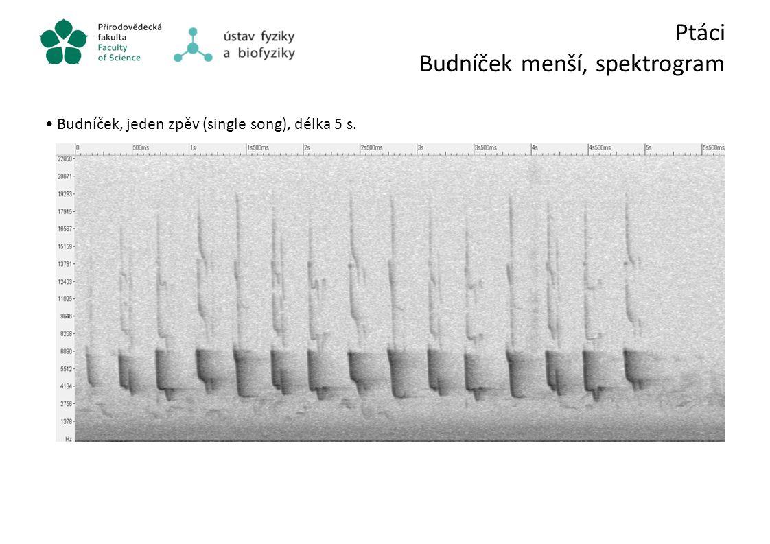 Ptáci Budníček menší, spektrogram Budníček, jeden zpěv (single song), délka 5 s.