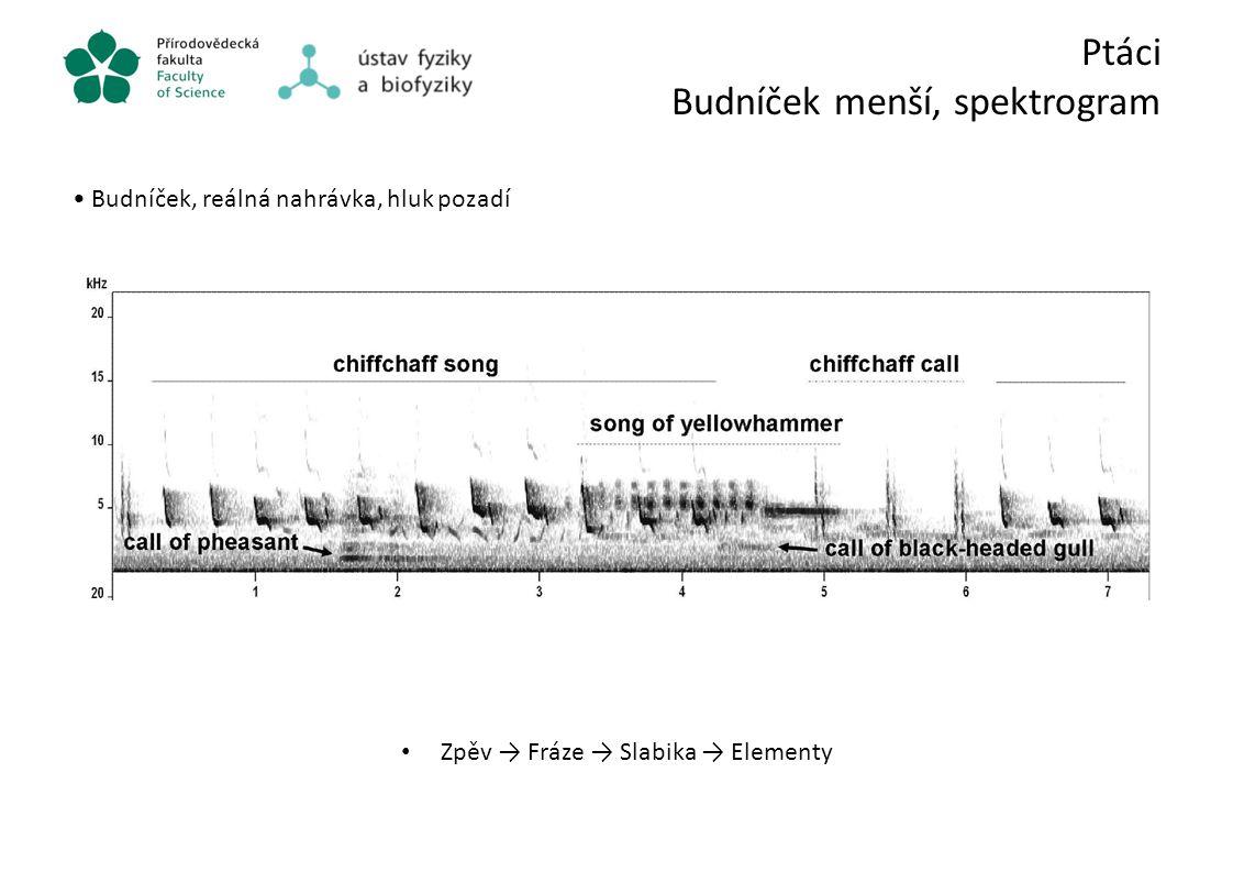 Ptáci Budníček menší, spektrogram Budníček, reálná nahrávka, hluk pozadí Zpěv → Fráze → Slabika → Elementy