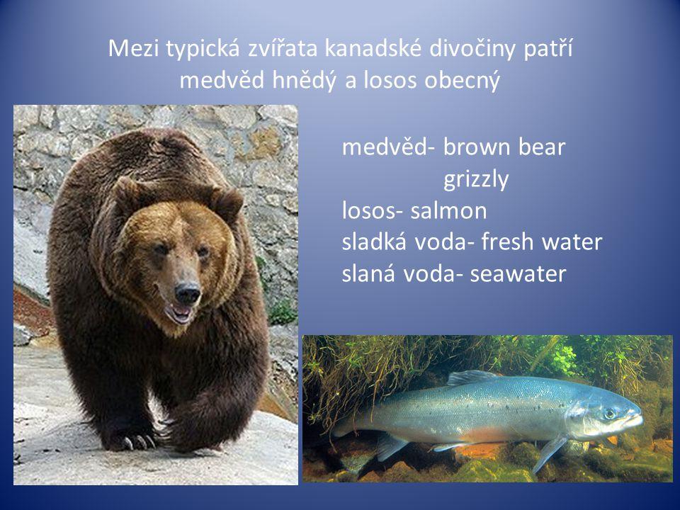 Mezi typická zvířata kanadské divočiny patří medvěd hnědý a losos obecný medvěd- brown bear grizzly losos- salmon sladká voda- fresh water slaná voda-