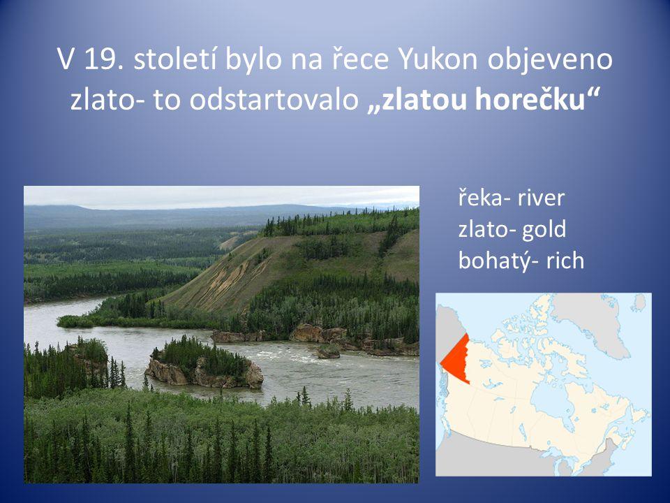 """V 19. století bylo na řece Yukon objeveno zlato- to odstartovalo """"zlatou horečku"""" řeka- river zlato- gold bohatý- rich"""
