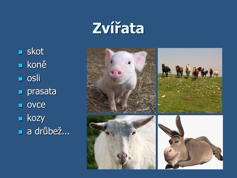 Zvířata skot skot koně koně osli osli prasata prasata ovce ovce kozy kozy a drůbež... a drůbež...