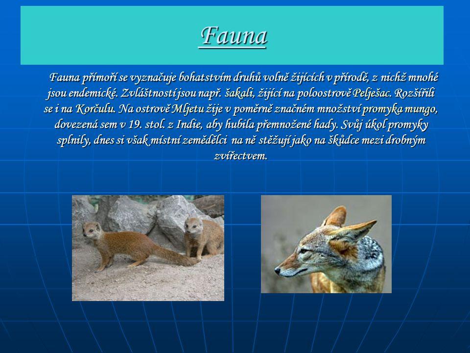 Fauna Fauna přímoří se vyznačuje bohatstvím druhů volně žijících v přírodě, z nichž mnohé jsou endemické. Zvláštností jsou např. šakali, žijící na pol