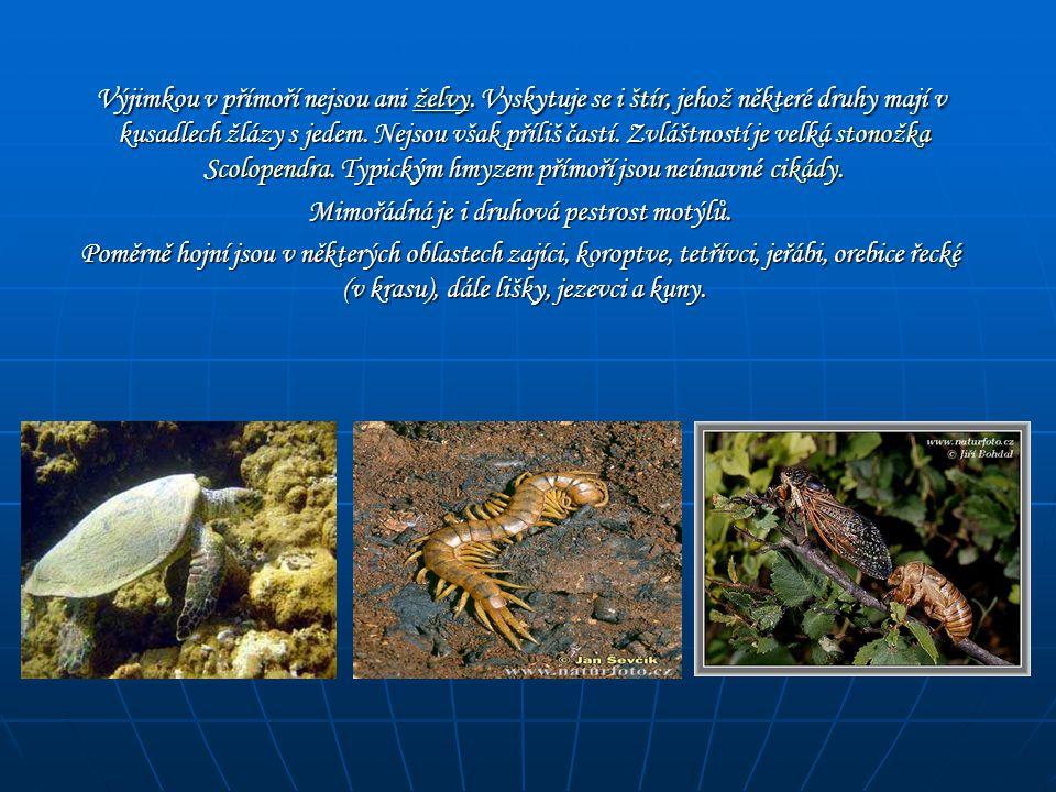 Výjimkou v přímoří nejsou ani želvy. Vyskytuje se i štír, jehož některé druhy mají v kusadlech žlázy s jedem. Nejsou však příliš častí. Zvláštností je