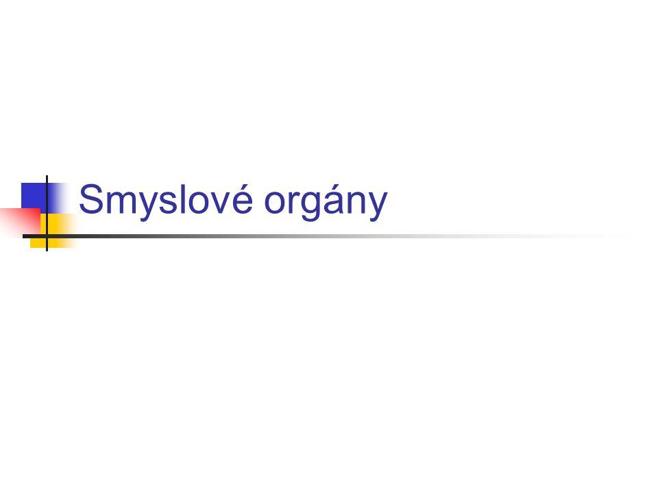Smyslové orgány