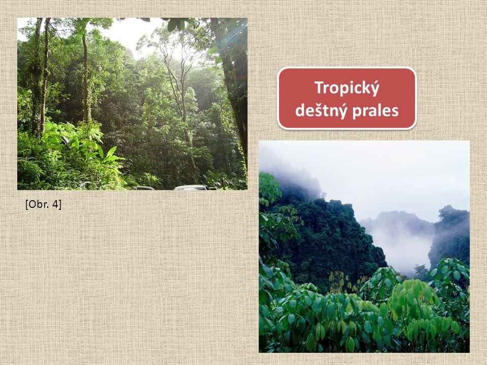 [Obr. 4] Tropický deštný prales