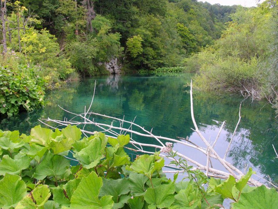Podle pověsti jezera vznikla v době velkého sucha, kdy se všichni obyvatelé modlili byť i o jedinou kapku vody. Nad lidem se tehdy slitovala Černá krá