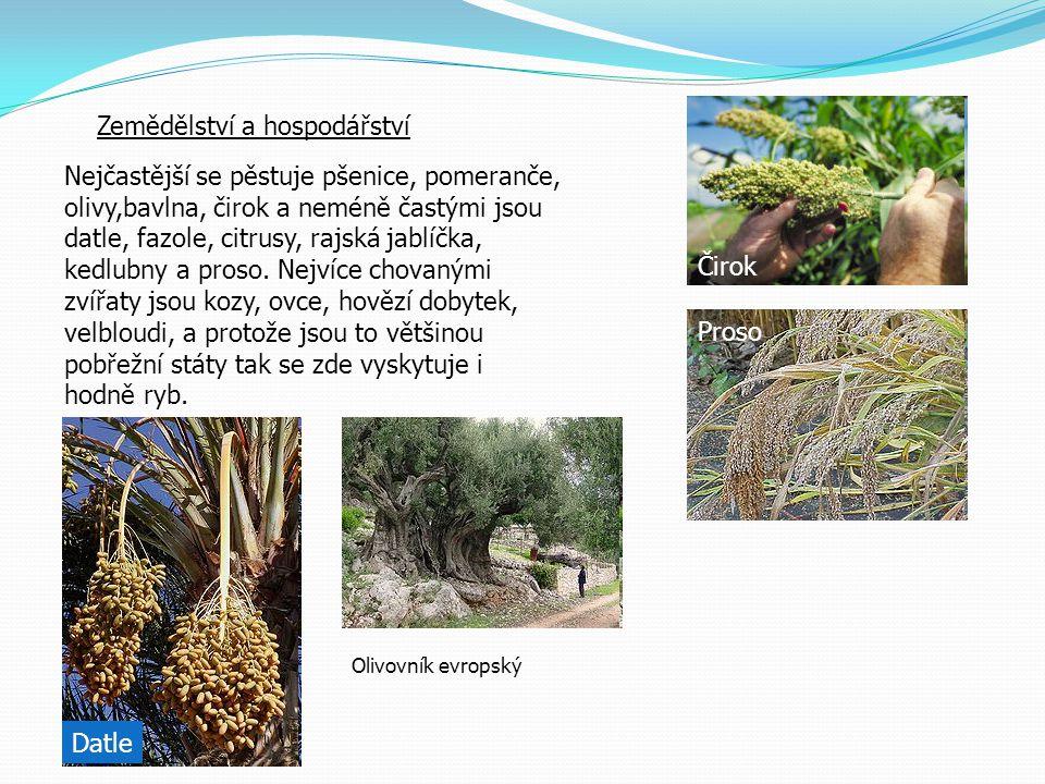 Zemědělství a hospodářství Nejčastější se pěstuje pšenice, pomeranče, olivy,bavlna, čirok a neméně častými jsou datle, fazole, citrusy, rajská jablíčk