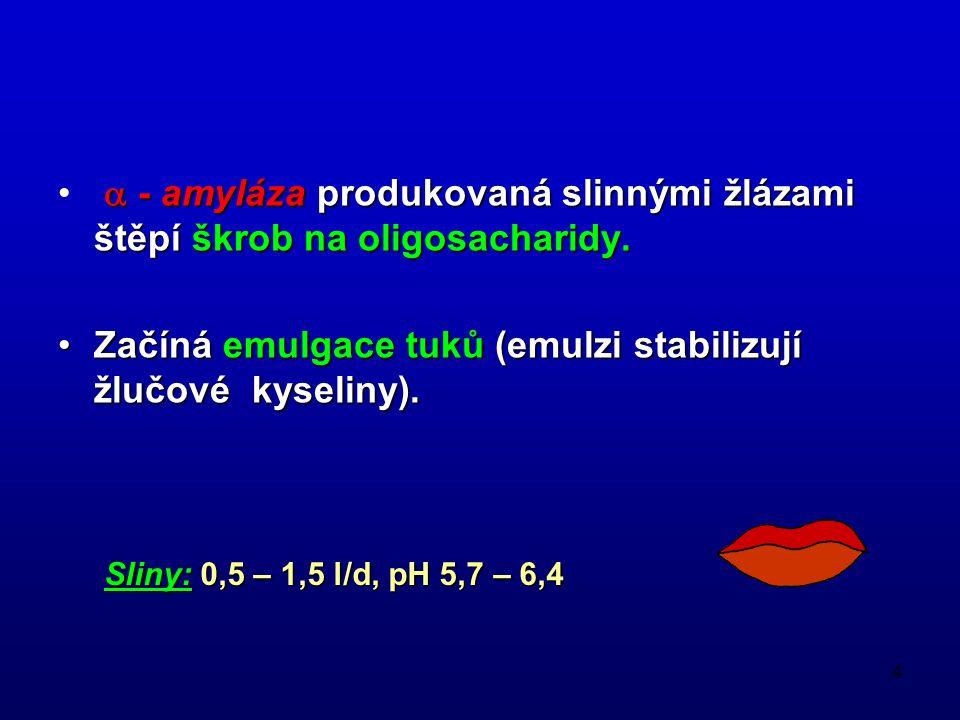 4  - amyláza produkovaná slinnými žlázami štěpí škrob na oligosacharidy. Začíná emulgace tuků (emulzi stabilizují žlučové kyseliny).Začíná emulgace t