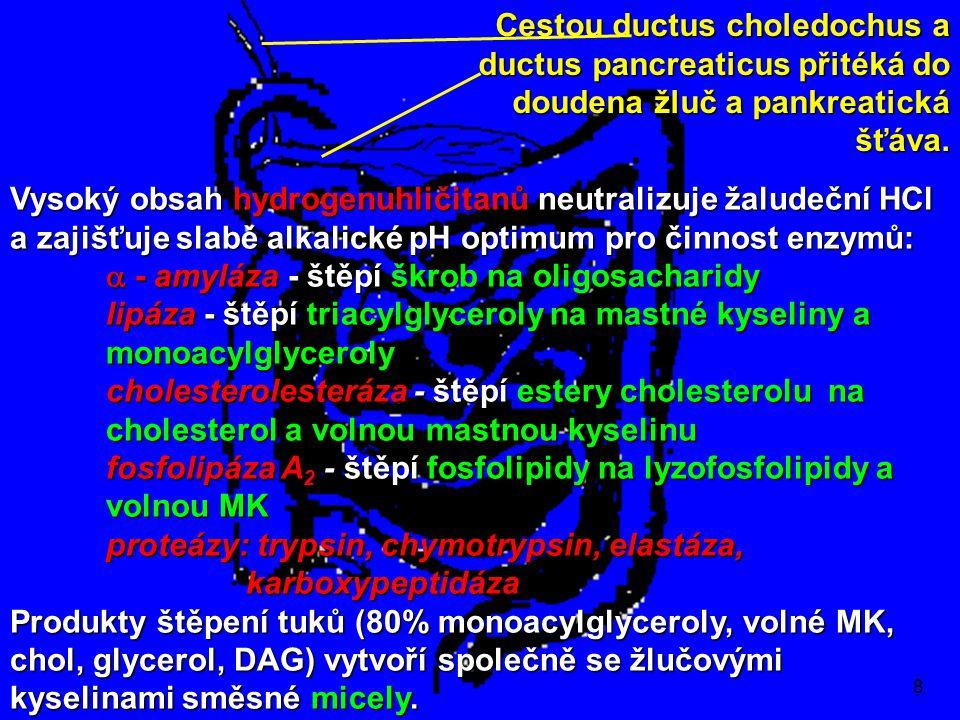 8 Vysoký obsah hydrogenuhličitanů neutralizuje žaludeční HCl a zajišťuje slabě alkalické pH optimum pro činnost enzymů:  - amyláza - štěpí škrob na oligosacharidy lipáza - štěpí triacylglyceroly na mastné kyseliny a monoacylglyceroly cholesterolesteráza - štěpí estery cholesterolu na cholesterol a volnou mastnou kyselinu fosfolipáza A 2 - štěpí fosfolipidy na lyzofosfolipidy a volnou MK proteázy: trypsin, chymotrypsin, elastáza, karboxypeptidáza Produkty štěpení tuků (80% monoacylglyceroly, volné MK, chol, glycerol, DAG) vytvoří společně se žlučovými kyselinami směsné micely.