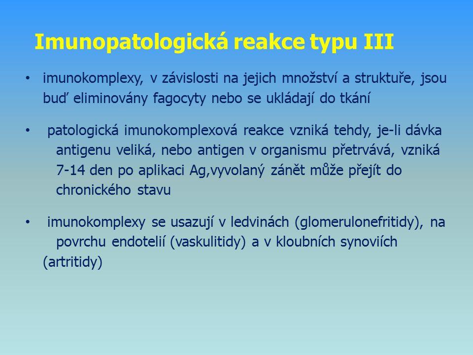 imunokomplexy, v závislosti na jejich množství a struktuře, jsou buď eliminovány fagocyty nebo se ukládají do tkání patologická imunokomplexová reakce