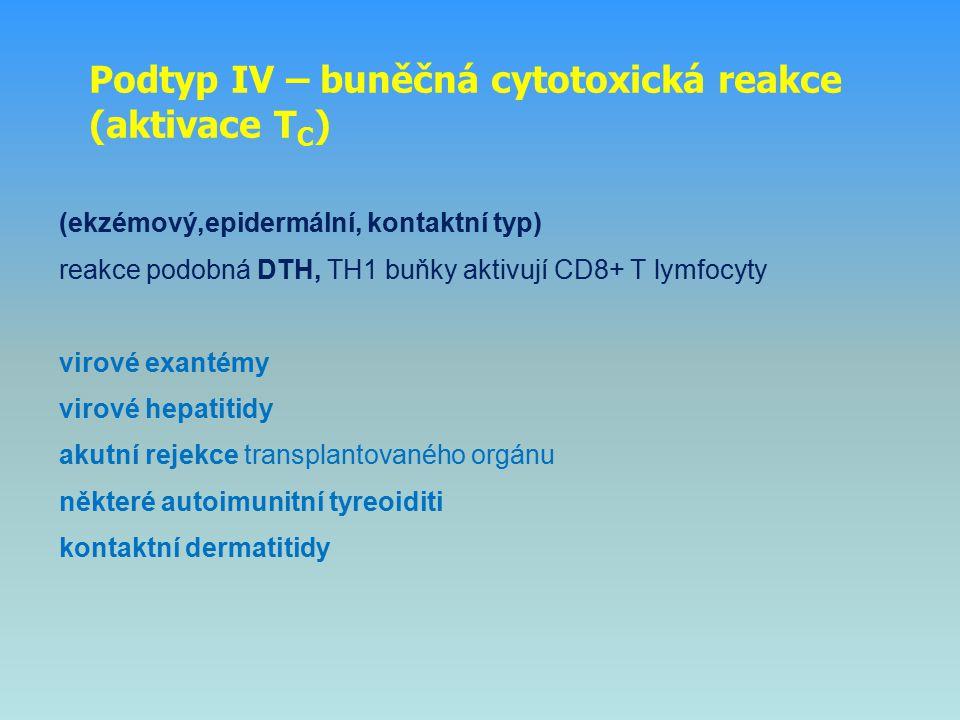 Podtyp IV – buněčná cytotoxická reakce (aktivace T C ) (ekzémový,epidermální, kontaktní typ) reakce podobná DTH, TH1 buňky aktivují CD8+ T lymfocyty v