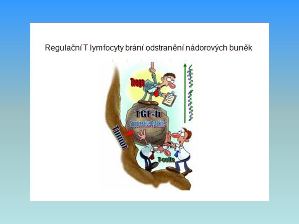  V boji proti nádorovým buňkám se významně uplatňují cytotoxické T lymfocyty, NK buňky a interferony  NK buňky zabíjejí buňky se sníženou expresí HLA I nebo buňky označené IgG (ADCC ), prostřednictvím cytokinů podporují vyzrávání DC  Interferony působí antiproliferativně, pomáhají v aktivaci NK buněk Obranná imunitní reakce