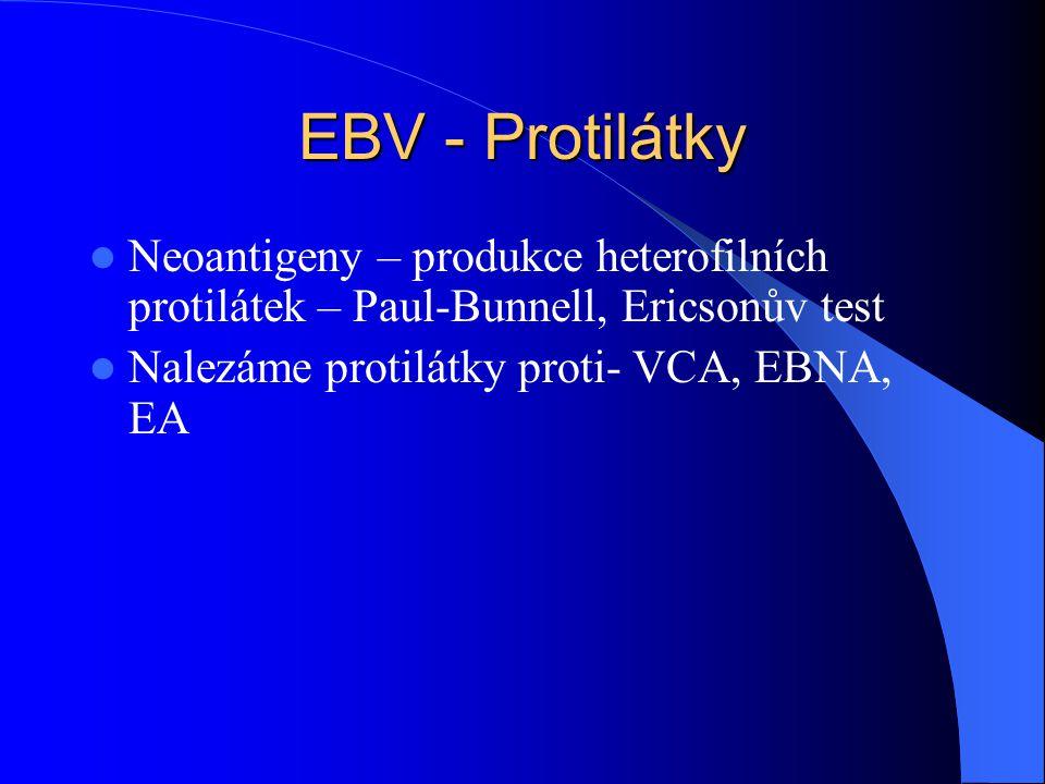 EBV - Protilátky Neoantigeny – produkce heterofilních protilátek – Paul-Bunnell, Ericsonův test Nalezáme protilátky proti- VCA, EBNA, EA