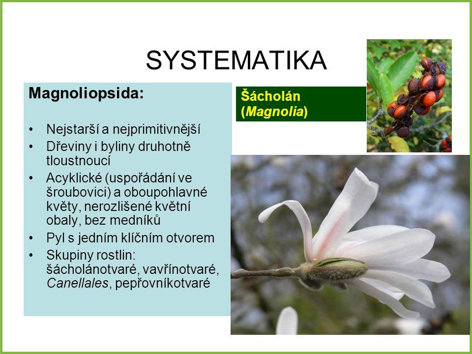 SYSTEMATIKA Magnoliopsida: Nejstarší a nejprimitivnější Dřeviny i byliny druhotně tloustnoucí Acyklické (uspořádání ve šroubovici) a oboupohlavné květy, nerozlišené květní obaly, bez medníků Pyl s jedním klíčním otvorem Skupiny rostlin: šácholánotvaré, vavřínotvaré, Canellales, pepřovníkotvaré Šácholán (Magnolia)