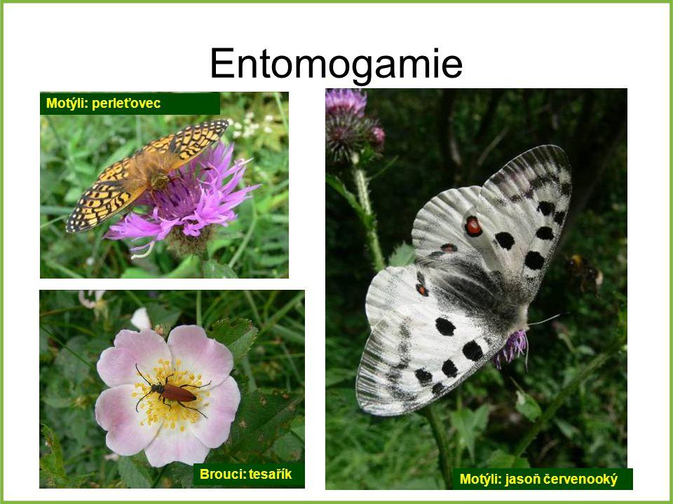 Entomogamie Motýli: perleťovec Brouci: tesařík Motýli: jasoň červenooký