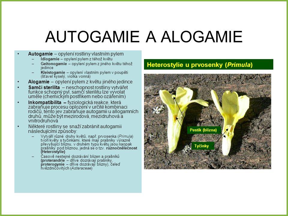 AUTOGAMIE A ALOGAMIE Autogamie – opylení rostliny vlastním pylem –Idiogamie – opylení pylem z téhož květu –Geitonogamie – opylení pylem z jiného květu téhož jedince –Kleistogamie – opylení vlastním pylem v poupěti (šťavel kyselý, violka vonná) Alogamie – opylení pylem z květu jiného jedince Samčí sterilita – neschopnost rostliny vytvářet funkce schopný pyl, samčí sterilitu lze vyvolat uměle (chemickým postřikem nebo ozářením) Inkompatibilita – fyziologická reakce, která zabraňuje procesu oplození v určité kombinaci rodičů, tento jev zabraňuje autogamii u allogamních druhů, může být mezirodová, mezidruhová a vnitrodruhová Některé rostliny se snaží zabránit autogamii následujícími způsoby: –Vytváří různé druhy květů, např.