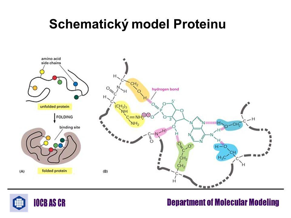 Schematický model Proteinu