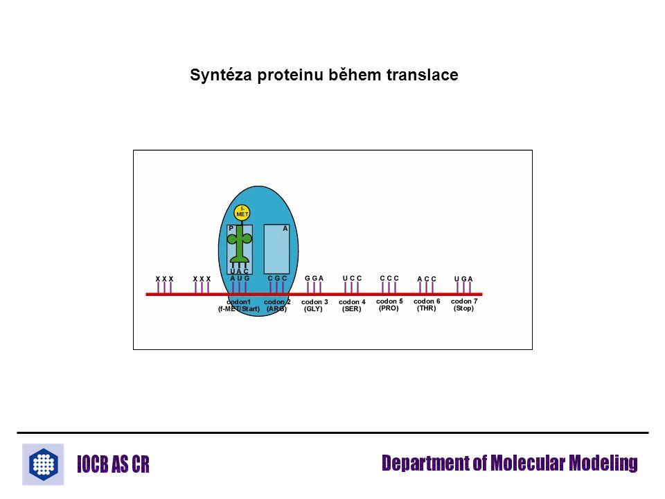 Syntéza proteinu během translace