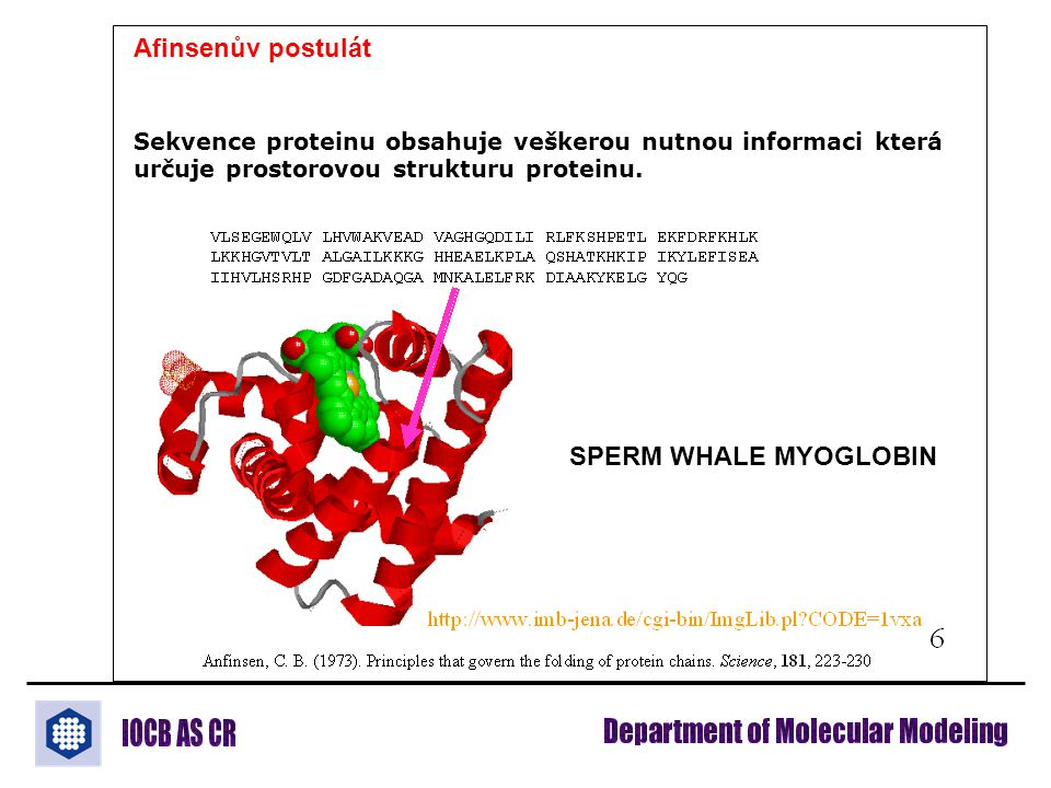 Afinsenův postulát Sekvence proteinu obsahuje veškerou nutnou informaci která určuje prostorovou strukturu proteinu. SPERM WHALE MYOGLOBIN