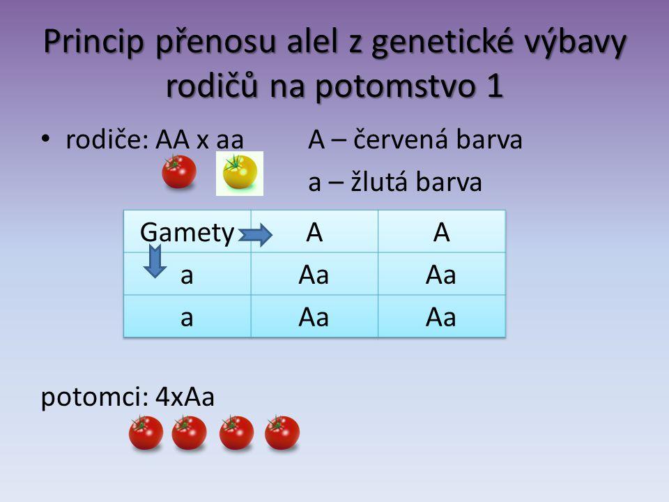 Princip přenosu alel z genetické výbavy rodičů na potomstvo 1 rodiče: AA x aaA – červená barva a – žlutá barva potomci: 4xAa