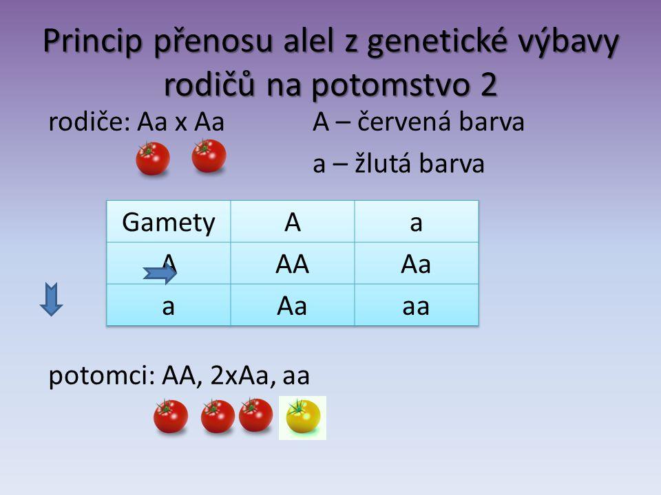 Princip přenosu alel z genetické výbavy rodičů na potomstvo 2 rodiče: Aa x Aa A – červená barva a – žlutá barva potomci: AA, 2xAa, aa