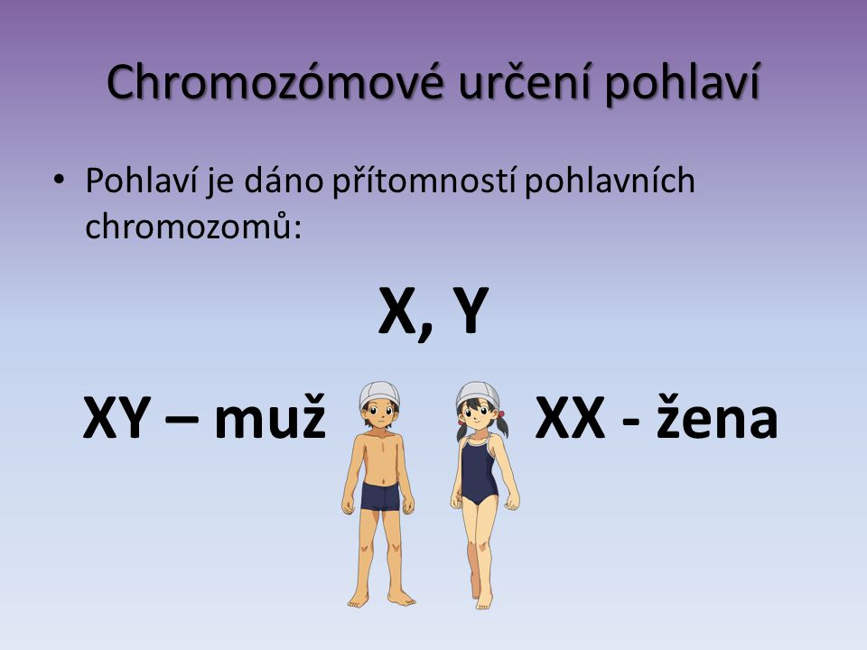 Chromozómové určení pohlaví Pohlaví je dáno přítomností pohlavních chromozomů: X, Y XY – muž XX - žena