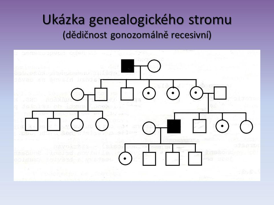 Ukázka genealogického stromu (dědičnost gonozomálně recesivní)