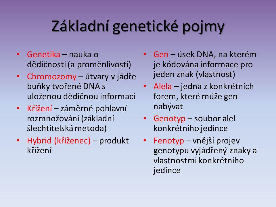 Základní genetické pojmy Genetika – nauka o dědičnosti (a proměnlivosti) Chromozomy – útvary v jádře buňky tvořené DNA s uloženou dědičnou informací K