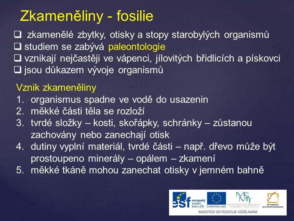 Zkameněliny - fosilie  zkamenělé zbytky, otisky a stopy starobylých organismů  studiem se zabývá paleontologie  vznikají nejčastěji ve vápenci, jíl