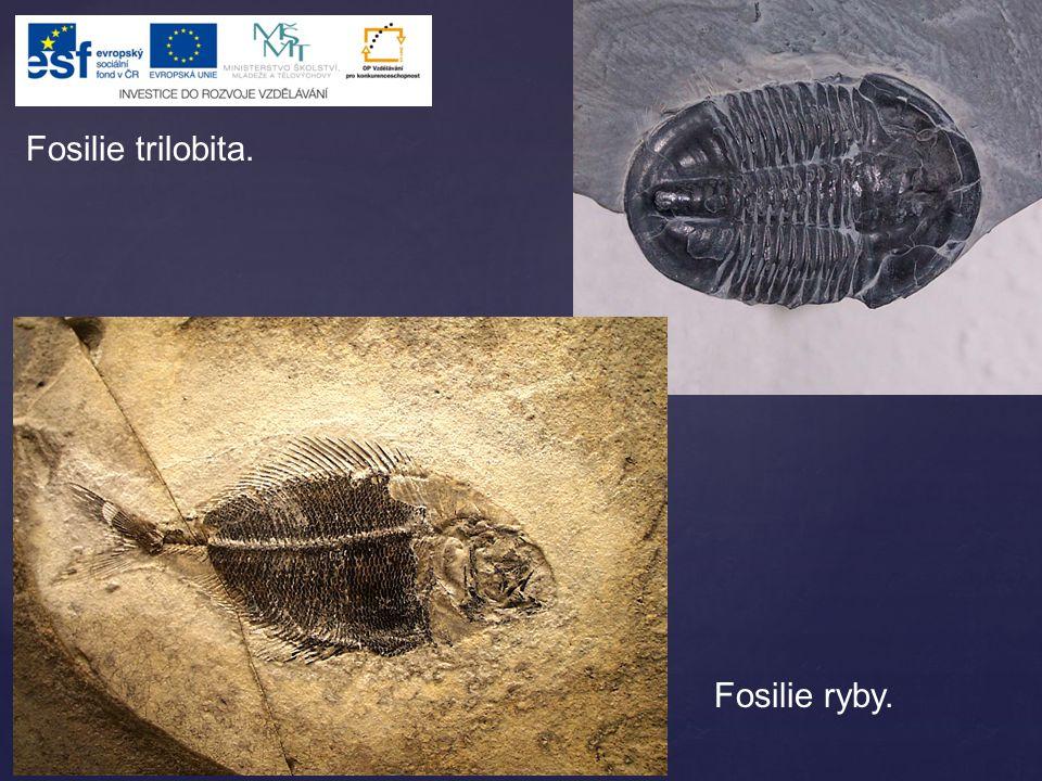 Fosilie trilobita. Fosilie ryby.