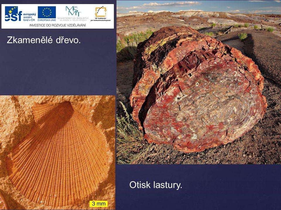 Živoucí fosilie je žijící organismus, kterého známe i ve formě zkameněliny.