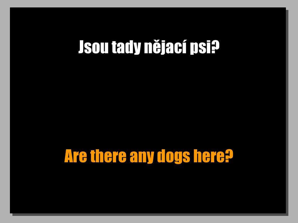 Jsou tady nějací psi Are there any dogs here