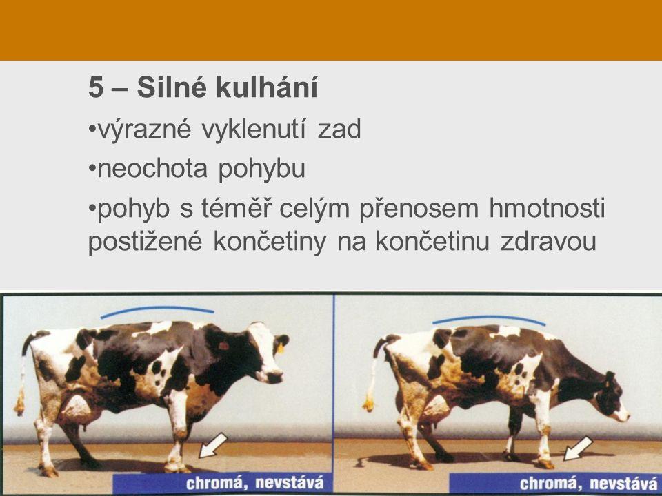 5 – Silné kulhání výrazné vyklenutí zad neochota pohybu pohyb s téměř celým přenosem hmotnosti postižené končetiny na končetinu zdravou
