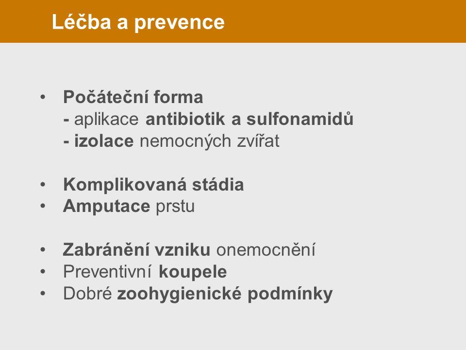 Léčba a prevence(panaritium) Počáteční forma - aplikace antibiotik a sulfonamidů - izolace nemocných zvířat Komplikovaná stádia Amputace prstu Zabráně