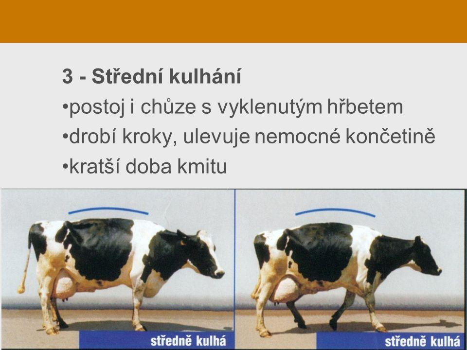 3 - Střední kulhání postoj i chůze s vyklenutým hřbetem drobí kroky, ulevuje nemocné končetině kratší doba kmitu
