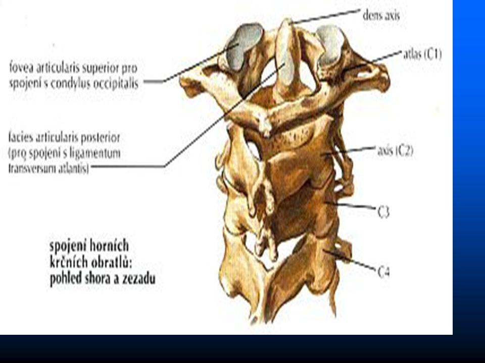 chondroza – vysychání ploténky – snížení výšky - ztráta chondroza – vysychání ploténky – snížení výšky - ztráta elasticity - výhřez elasticity - výhřez osteochondroza - kombinace chondrozy a tvorby osteofytů osteochondroza - kombinace chondrozy a tvorby osteofytů - zúžení páteřního kanálu - zúžení páteřního kanálu Postižení meziobratlových kloubů Postižení meziobratlových kloubů - zvýšená zátěž při snížení disků - zvýšená zátěž při snížení disků Osteofytické valy Osteofytické valy - patologická osteoprodukce – osteofyty kolem - patologická osteoprodukce – osteofyty kolem kloubů postižených arthrozou kloubů postižených arthrozou - přemosťující hyperspondyloza - přemosťující hyperspondyloza Postižení plotének Postižení plotének