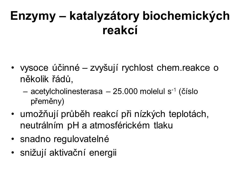 Enzymy – katalyzátory biochemických reakcí vysoce účinné – zvyšují rychlost chem.reakce o několik řádů, –acetylcholinesterasa – 25.000 molelul s -1 (č