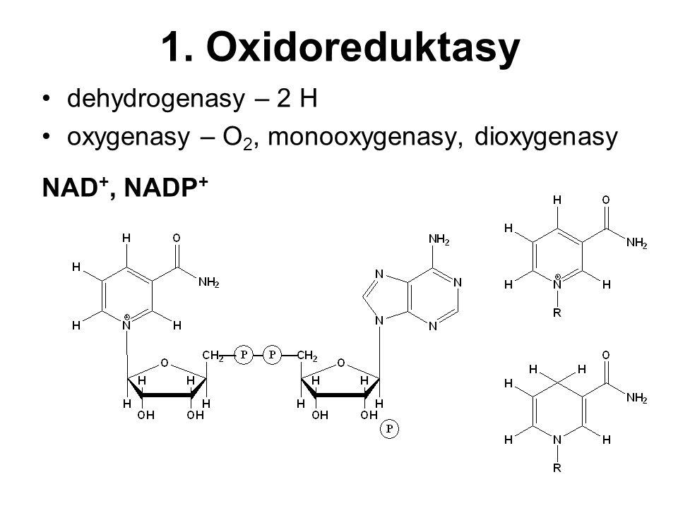 1. Oxidoreduktasy dehydrogenasy – 2 H oxygenasy – O 2, monooxygenasy, dioxygenasy NAD +, NADP +