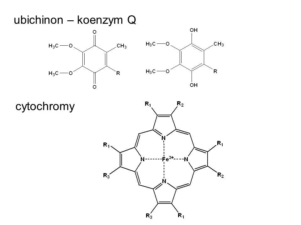 ubichinon – koenzym Q cytochromy