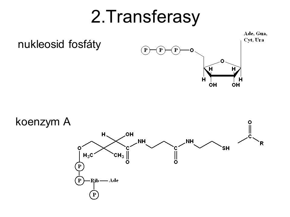 2.Transferasy nukleosid fosfáty koenzym A